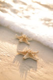 Zwei Starfish auf Seeozean setzen in Florida, weicher leichter Sonnenaufgang auf den Strand Stockbild