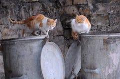 Zwei Streukatzen auf dem Abfall-Behälter Lizenzfreies Stockfoto