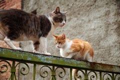 Zwei Streukatzen auf dem Zaun lizenzfreies stockbild