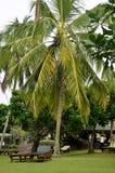 Zwei sunbeds durch eine Palme an einer Rücksortierung Stockbilder