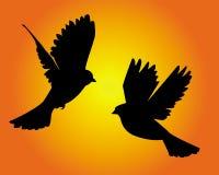 Zwei Tauben Stock Abbildung