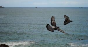 Zwei Tauben Stockfotos