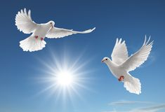 Zwei Tauben Stockbilder
