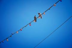 Zwei Tauben auf dem Draht Stockfotos