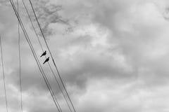 Zwei Tauben auf einem elektrischen Draht gegen den blauen Himmel mit Wolken Lizenzfreie Stockbilder