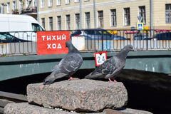 Zwei Tauben Der Griboyedov-Kanaldamm Stockfotos
