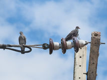 Zwei Tauben, die auf dem elektrischen angetriebenen Kabel sitzen Lizenzfreie Stockbilder