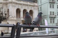 Zwei Tauben, die auf Geländer in Karlovy Vary stehen Stockfoto
