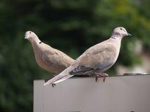 Zwei Tauben im Sun Lizenzfreies Stockbild