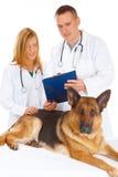 Zwei Tierärzte, die Hund überprüfen lizenzfreie stockbilder