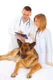 Zwei Tierärzte, die Hund überprüfen stockbilder
