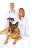 Zwei Tierärzte, die Hund überprüfen stockbild