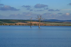 Zwei tote Bäume Lizenzfreie Stockfotos