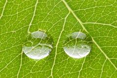 Zwei transparente Tropfen auf grünem Blatt Lizenzfreies Stockbild