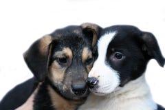 Zwei traurige Hunde lizenzfreies stockfoto