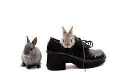 Zwei und ein Schuh stockfotos