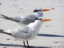 Zwei Vögel Lizenzfreies Stockfoto