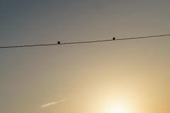 Zwei Vögel auf Draht Stockfotografie