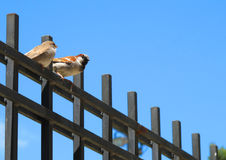 Zwei Vögel auf einem Zaun lizenzfreie stockfotos