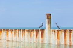 Zwei Vögel, die auf einem Metallwellenbrecher sitzen Stockfotografie