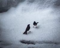 Zwei Vögel, die im Schnee kämpfen lizenzfreie stockfotos