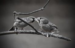 Zwei Vögel, die Teamwork-Partnerschaft u. Kommunikation in der Natur zeigen Stockbild