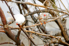 Zwei Vögel in einem Baum. Stockbild