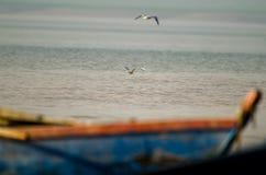 Zwei Vögel schweben auf einem See um ein Boot lizenzfreies stockfoto