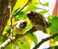 Zwei Vögel in SID und sehen stockfotos