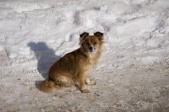 Zwei verließen kleine Brown-Hunde, die in der Straße sich entspannen lizenzfreie stockfotos