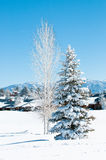 Schnee bedeckte Bäume Stockfotos