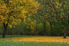 Zwei verschiedene Herbstbäume Stockfoto