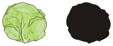 Zwei verschiedene Kohlpflanzen Stockfoto