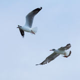Zwei Vögel auf dem blauen Himmel Lizenzfreie Stockfotos