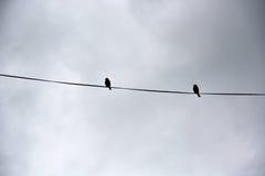 Zwei Vögel auf einem Draht Stockfotos