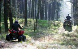 Zwei vierfache Leitungen im Wald Stockbild