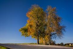 zwei würzige Herbstkastanien Stockbild