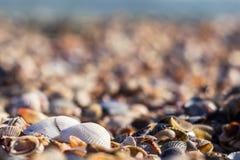 Zwei weiße Muscheln auf einem undeutlichen Hintergrund Lizenzfreies Stockfoto