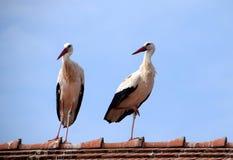 Zwei weiße Störche, die auf Hausdach stehen stockbild