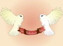 Zwei weiße Tauben fliegen mit Grußzufuhr Stockbild