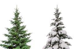 Zwei Weihnachtsbäume lokalisierten auf weißem Hintergrund einer mit Schnee anderer außen Lizenzfreies Stockfoto