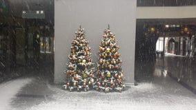 Zwei Weihnachtsbaum Lizenzfreie Stockfotografie