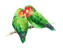 Zwei Wellensittich-Aquarell-exotische Vogel-Liebes-Illustrations-Hand gezeichnet Stockfotos