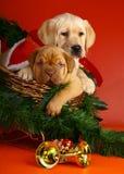 Zwei Welpen im Schlitten mit einer Weihnachtsgirlande. Lizenzfreie Stockbilder