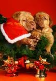Zwei Welpen im Schlitten mit einer Weihnachtsgirlande. Stockbild