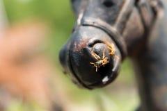 Zwei Wespen, die auf einer Pferdestatue sitzen Stockfotografie