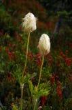 Zwei Wildflowers stockbilder