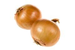 Zwei Zwiebeln trennten Stockbild