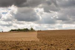 Zweifarbiges Feld und Oase Lizenzfreie Stockfotografie