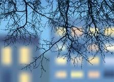 Zweig der Abendstadt Stockfotografie